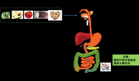 希芸膳食纤维-调节肠道菌群,呵护肠道健康
